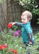 tulp-voorjaar